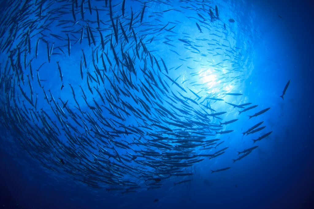 Effect of climate change on global fishery by 2050 to be discussed at GFF 2018